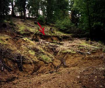 Example of erosion after trees were cut.