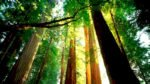Stop PG&E from cutting trees into our scenic San Lorenzo Valley!