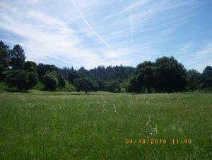 NOW: The Felton Meadow this Spring