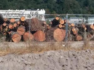 Logs stockpile behind Kmart.