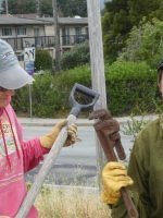 San Lorenzo River Estuary Project volunteers