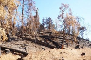 slope denuded of all trees