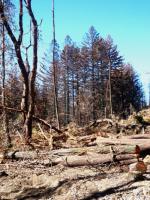 hardwoods in Bonny Doon PG&E